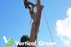 VG_Depezzatura_abbattimento_alberi_treeclimbing_2