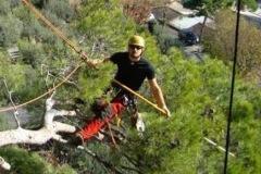 VG_Tree_climbing_potatura