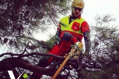 VG_Tree_climbing_potature_4